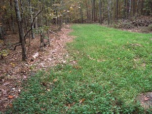 Planting and hunting green fields can be very effective to concentrate deer and to draw deer from other properties.