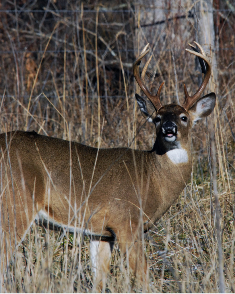 Where are the deer on that public land feeding, traveling and bedding?
